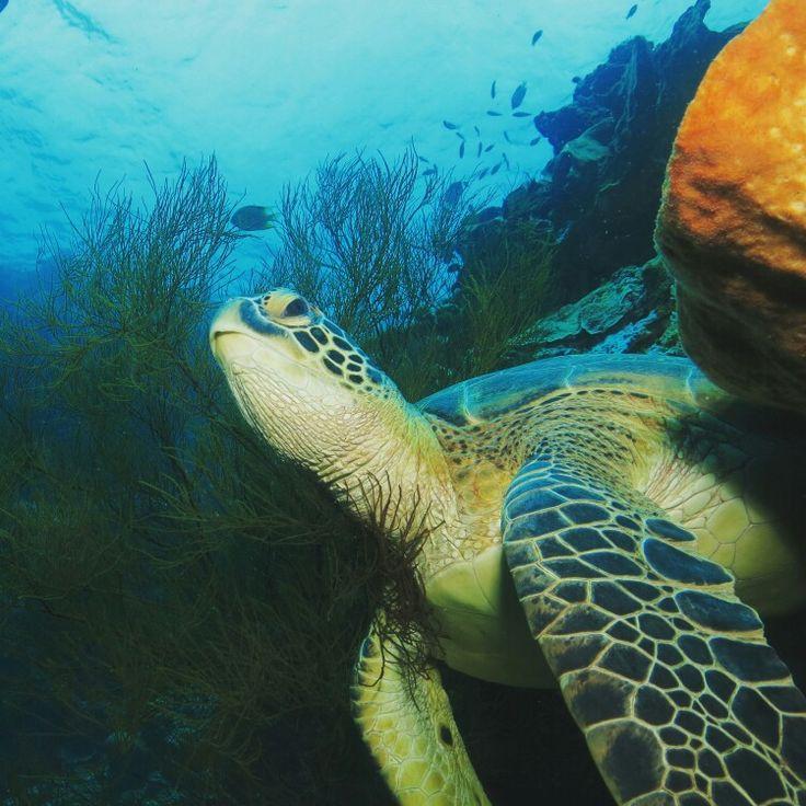 Get closer with Sea Turtle, Bunaken National Marine Park www.luleyhotels.com