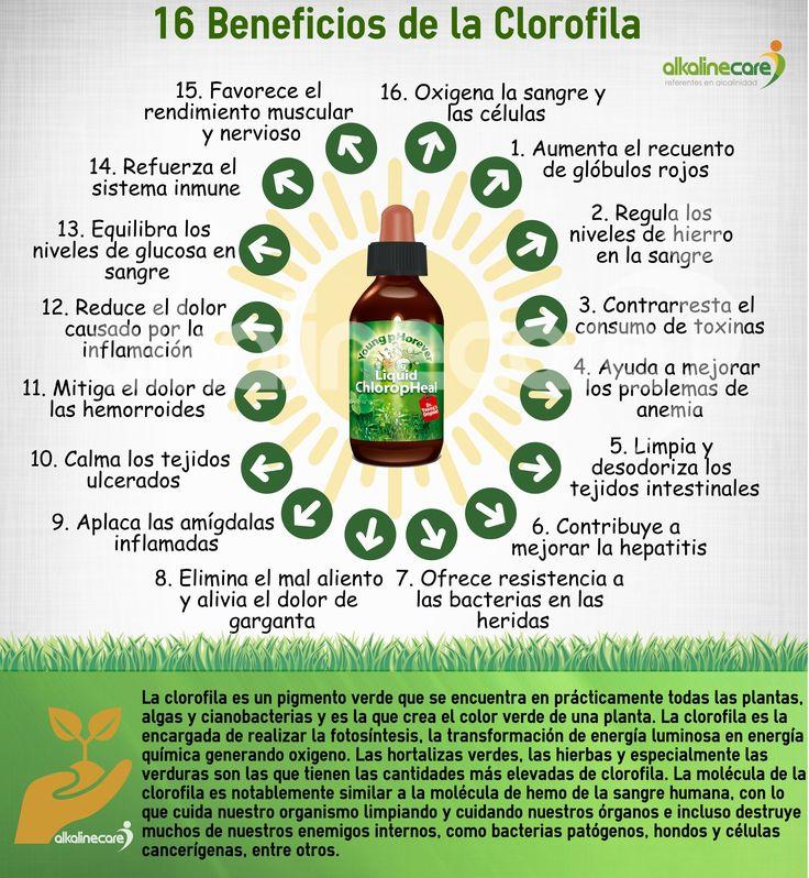 Propiedades y Beneficios de la Clorofila