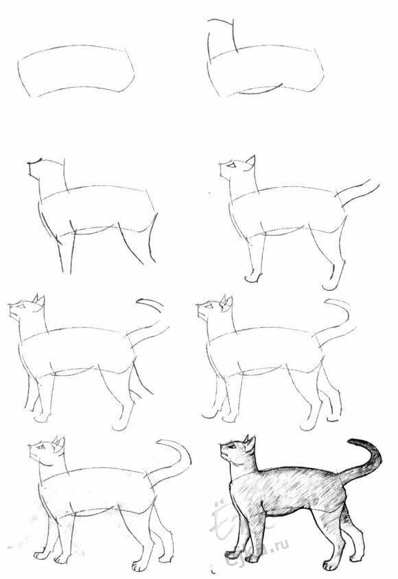 Pin By Dorota Jilkova On Tutorioly Cat Drawing Tutorial Animal Drawings Cat Drawing