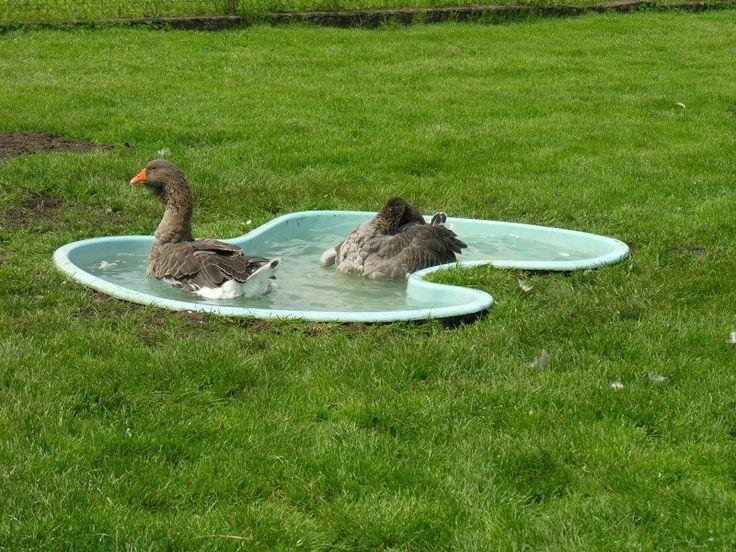 Les 34 meilleures images du tableau piscines sur pinterest for Algue dans piscine