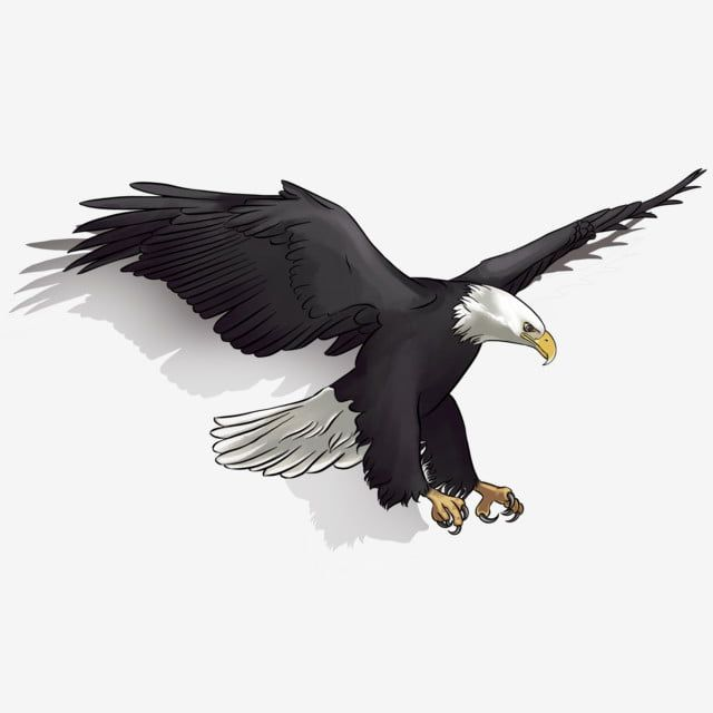 Domineering Eagle Flying In The Air Aerial Soaring Domineering Png Transparent Clipart Image And Psd File For Free Download Animal Clipart Eagle Tattoo Blue Sky Background