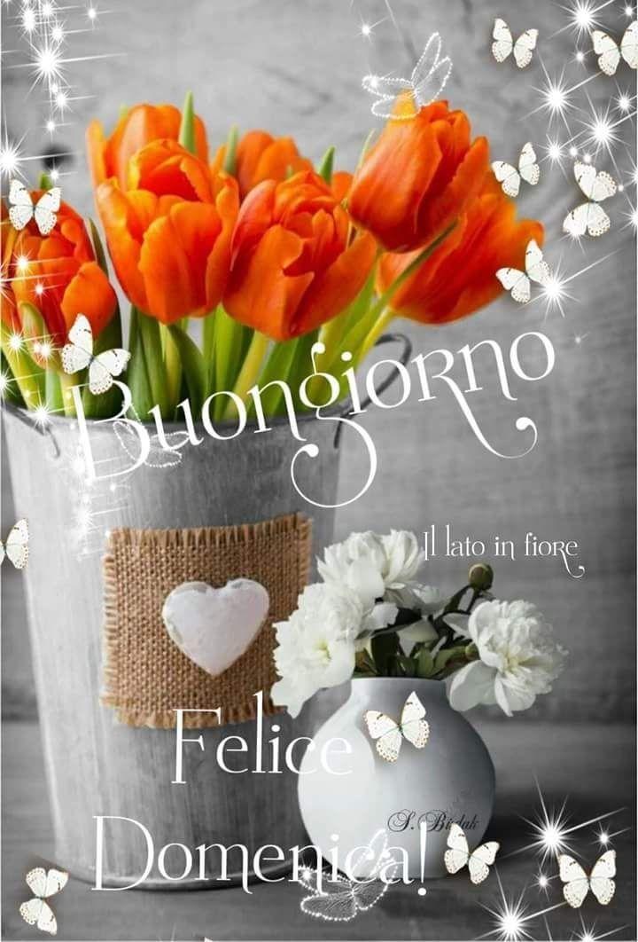 Buona Domenica Buongiorno A Tutti Feliz Domingo Buenas Noches E