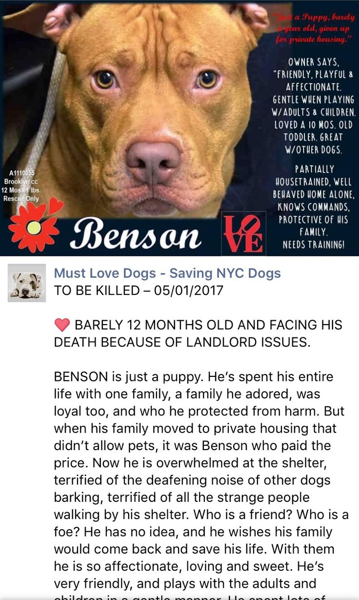LITTLE PUPPY BENSON WAS SENSELESSLY AND TOTALLY UNNECESSARILY MURDERED 5-1-2017 I'M SO VERY SORRY PRECIOUS /ij Brooklyn Center My name is BENSON. My Animal ID # is A1110055. I am a male tan am pit bull ter mix. The shelter thinks I am about 1 YEAR I came in the shelter as a OWNER SUR on 04/27/2017 from NY 11204, owner surrender reason stated was LLORDPRIVA. http://nycdogs.urgentpodr.org/benson-a1110055/