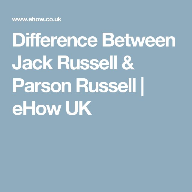 Difference Between Jack Russell & Parson Russell | eHow UK