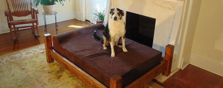 Yeager on his new XL GoliathPets.com dog bed with solid wood frame.