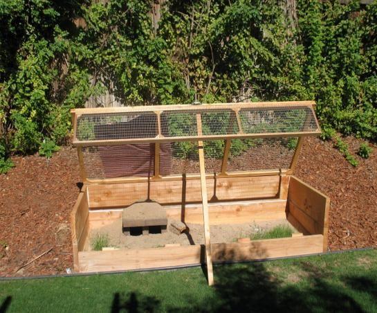 backyard tortoise habitat