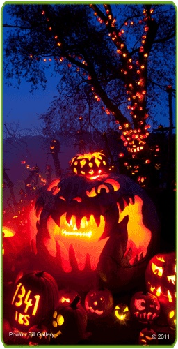 Jack-O-Lantern Spectacular | Roger Williams Zoo - so sad to miss it this year!