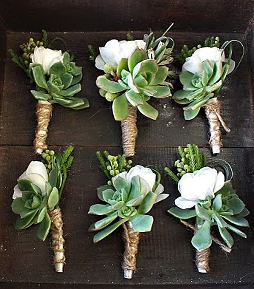 succulent wedding flower boutonniere, groom boutonniere, groom flowers, add pic ...