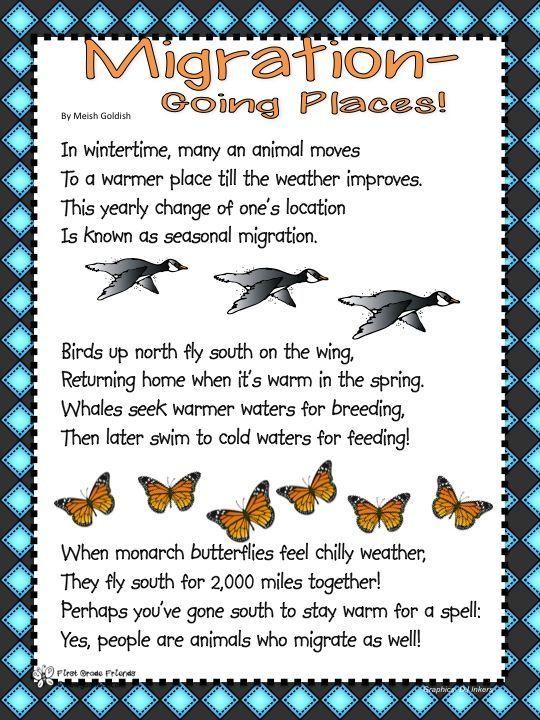 Bird Migration Worksheets in 2020 Migration preschool