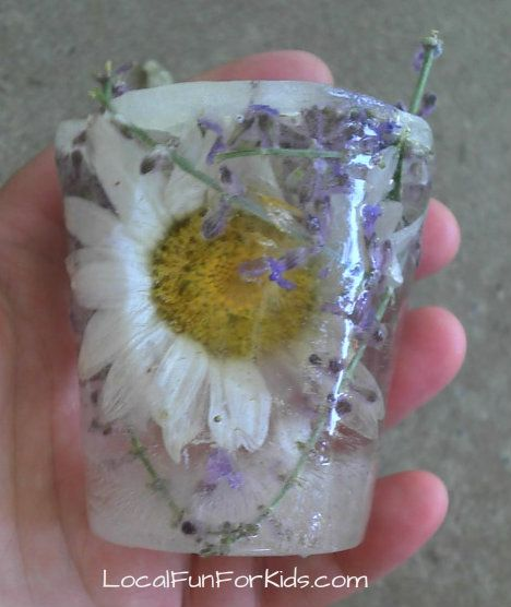 "Herbs & flowers frozen in ice then put in the water tray -   smell the different scents as they melt ("",)"