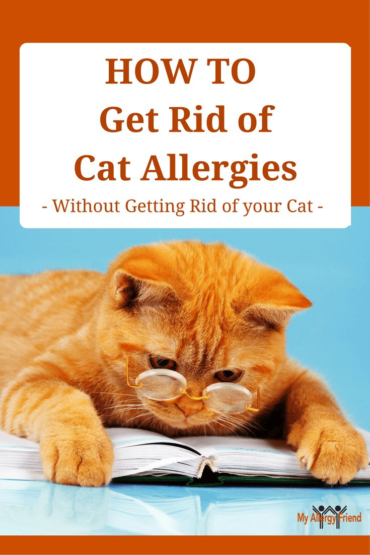 Best 25 cat allergies ideas on pinterest kitten treats what to treat your cat allergies even if you own a cat ccuart Image collections