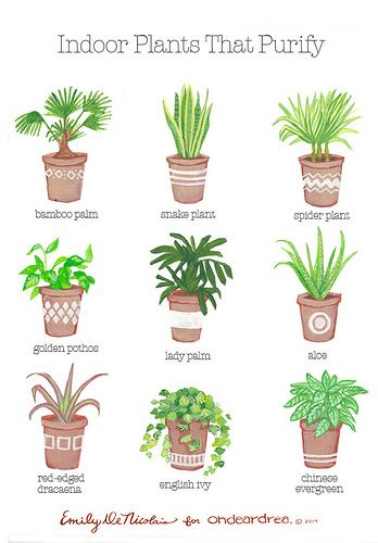 ohdeardrea: indoor plants that purify guide by ohdeardrea, via Flickr