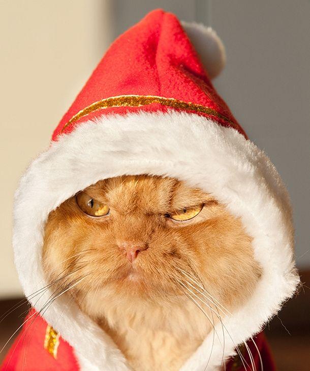 chat garfi evil grumpy cat (5)