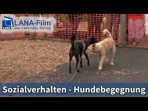 Hundebegegnungen mit und ohne Leine - Stressvermeidung bei Hundebegegnungen ! - YouTube