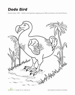 Dodo Bird Second Grade Birds And Worksheets