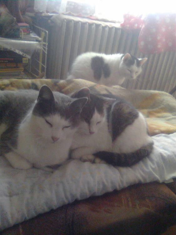 Szürke és Rozika így szerették egymást...