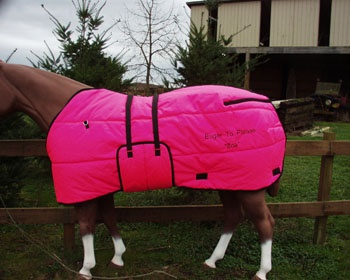 Hot Pink Stable Blanket