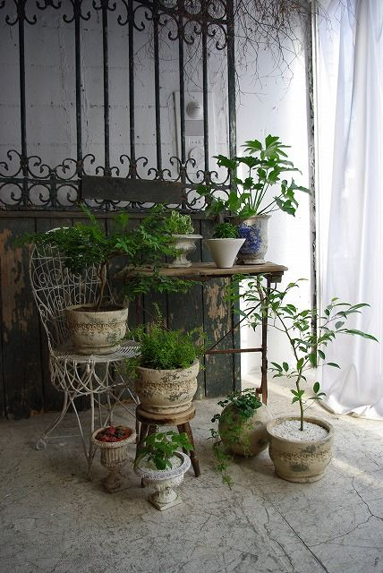 Plants : Antique Furniture demode10 Mothers Love Free Information on how to (Make Money Online) http://ibourl.com/1nss
