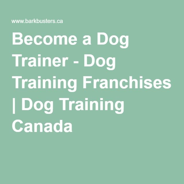 The 25+ best Become a dog trainer ideas on Pinterest Animal - dog trainer resume