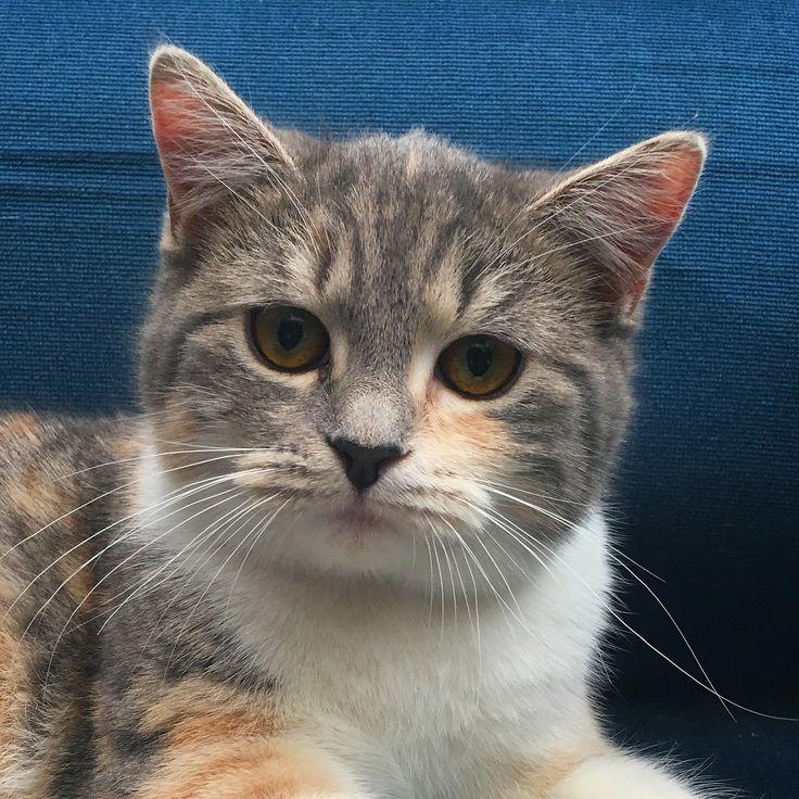 #cat  #cica