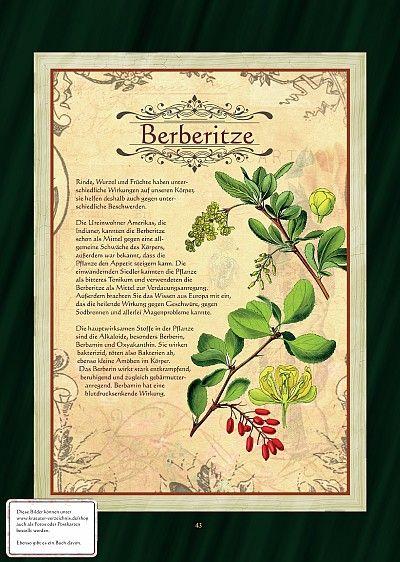 Berberitze - mischt sich zum Räuchern gut mit Färberdistel, Huflattich, Königskerze, Besenginster, Vogelknöterich, Kreuzblume, Hamamelis
