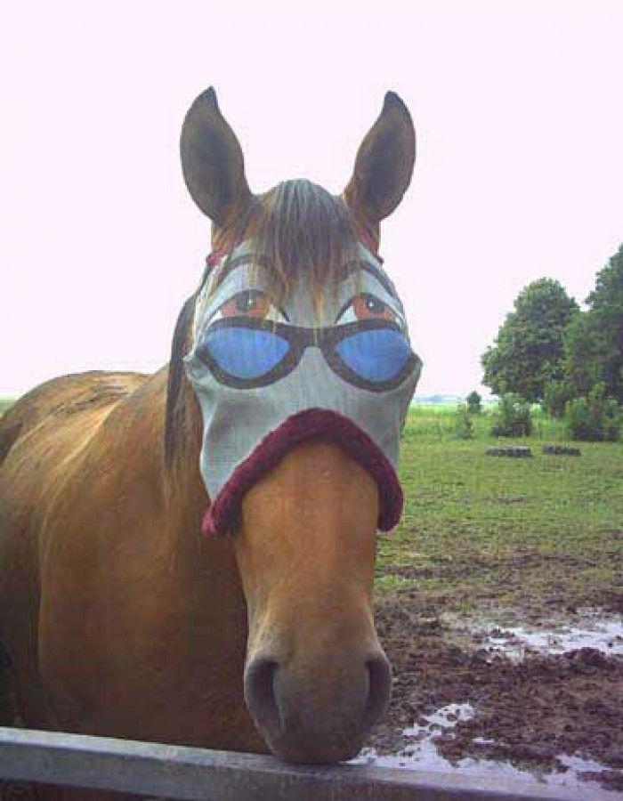 Прикольные картинки года лошади