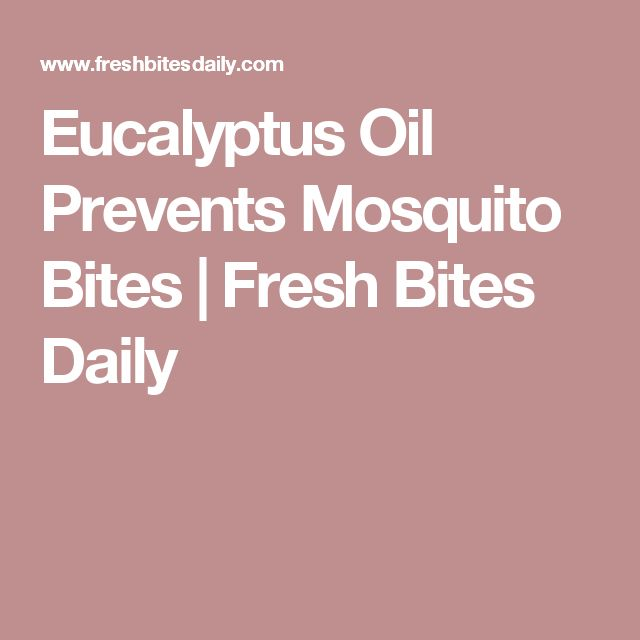 Eucalyptus Oil Prevents Mosquito Bites | Fresh Bites Daily