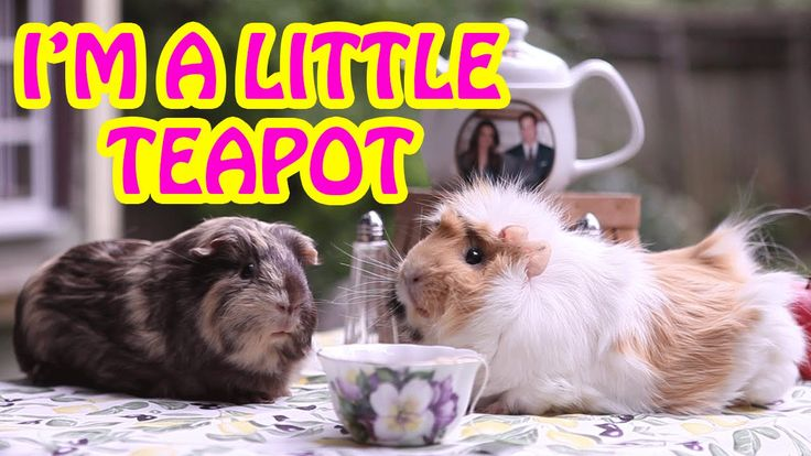I'm A Little Teapot | Video Nursery Rhymes for Kids | Cute Animals