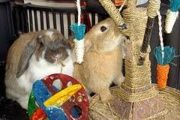 Want your rabbit to have lot of toys, but dont want to buy pet store toys? Check out this site for fresh new toys to make at home.