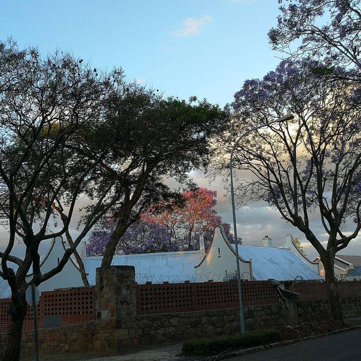ayeshaka jSurreal - picture within the picture#jacaranda#jacarandainyourpocket#johannesburg