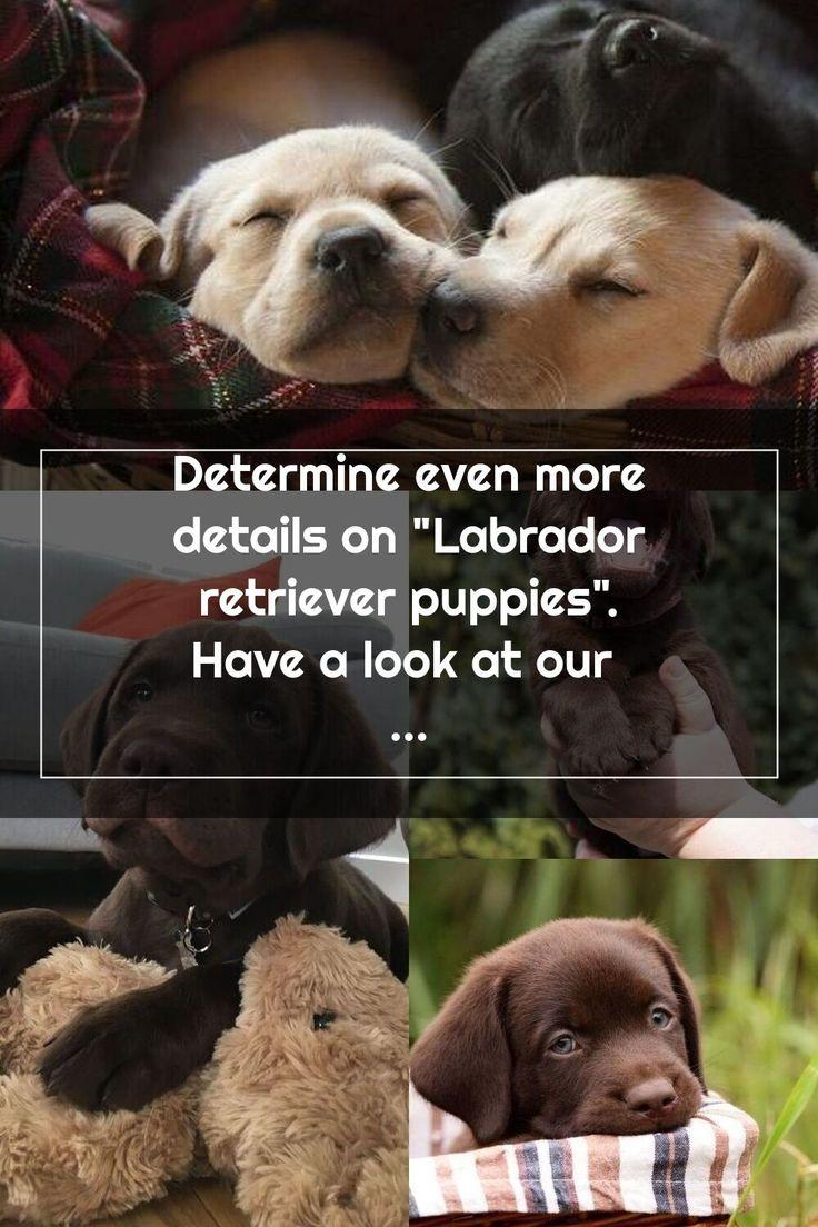 Determine even more details on labrador retriever puppies