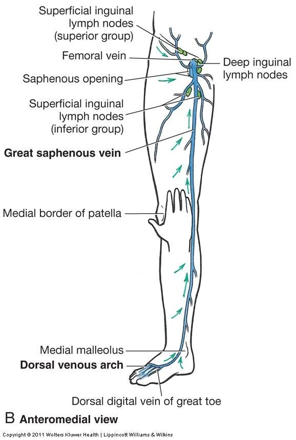 74 Best Anatomy Images On Pinterest