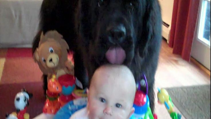 Hilarious Puppies Loving Babies: In honor of National Puppy Day, watch these hilarious clips of puppies loving babies.