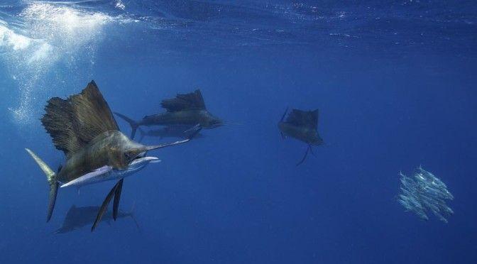 Belize underwater adventures