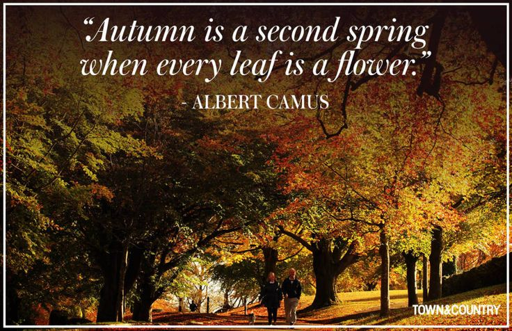 10 Fall Quotes - Best Quotes About Autumn