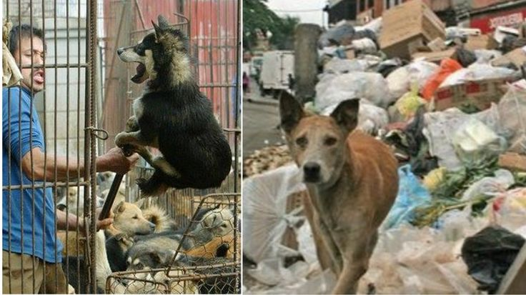 Hungry Venezuelans are hunting stray DOGS and CATS to survive as food runs out! Take Action Now!