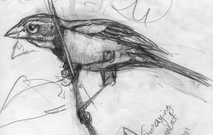 Desenhos De Sandro Cleuzo Para O Filme Angry Birds: Best 25+ Bird Sketch Ideas On Pinterest
