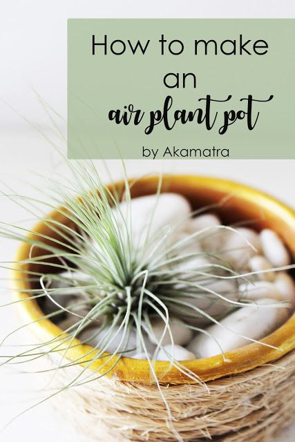 How to make an air plant pot - 6th issue of C2 magazine