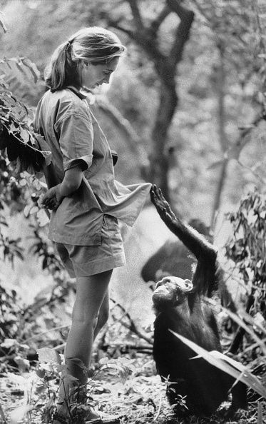 Jane Goodall with one of her research subjects in the Gombe National Park in northern Tanzania