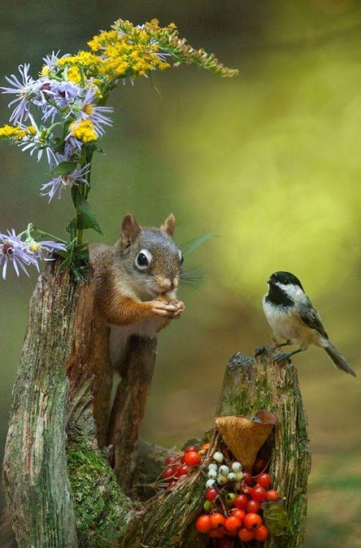 Картинки фото, доброе утро картинки красивые с птицами