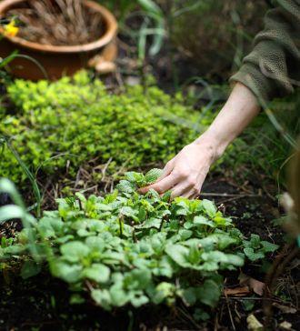 How To Start A Medicinal Herb Garden -- herbsandoilsworld.com