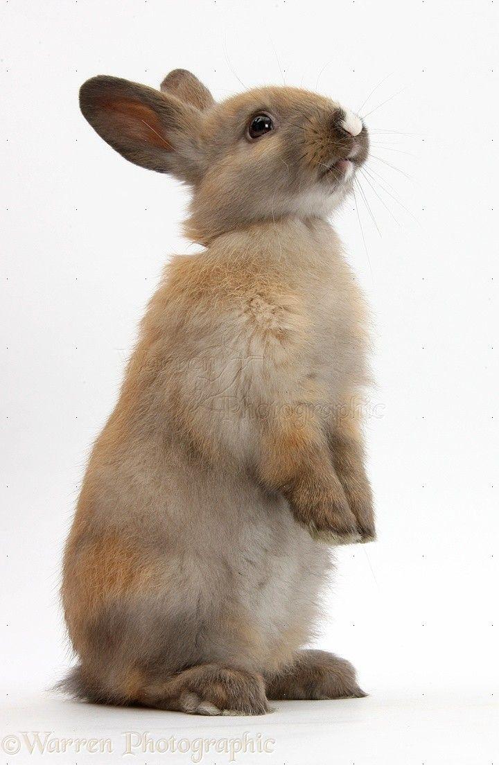 bunny looking up - Google Search | arting | Rabbit, Pet ...