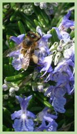 Confection d'un piège pour le frelon Vespa Velutina | www.abeille-arlesienne.com