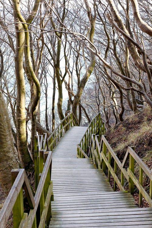 The stairs down på Møns Klint                                                                                                                                                      More