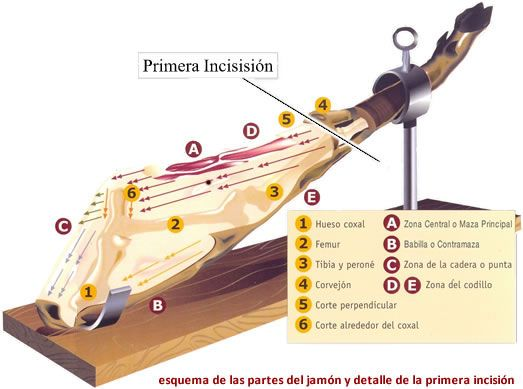 Antes de empezar a cortar el jamón es necesario limpiarlo es aconsejable colocarse un guante de malla metálica para evitar posibles cortes