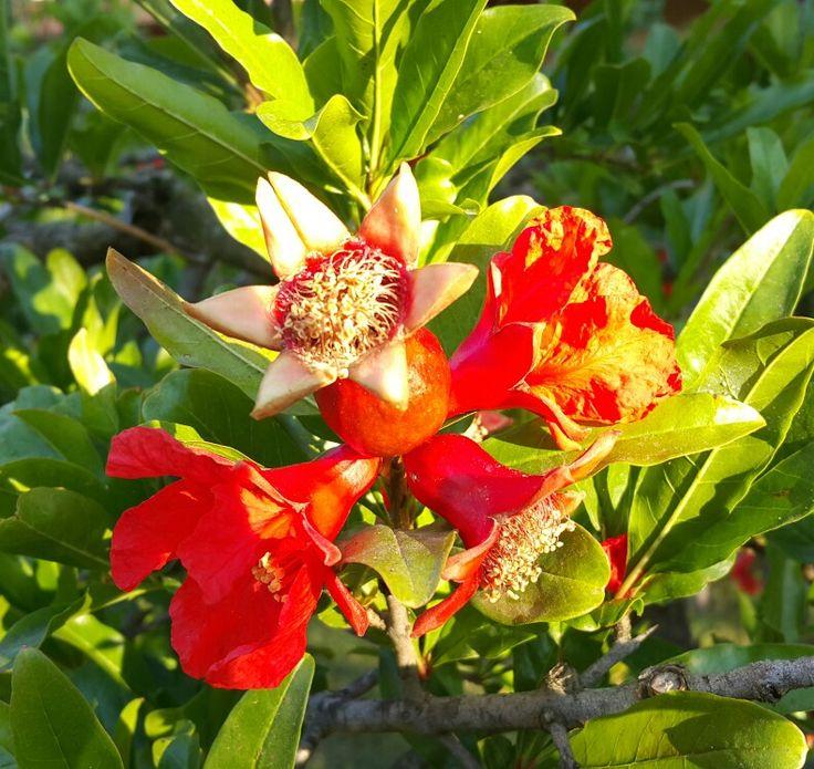 Kalp bir bahçe gibidir.  Onda mutlaka bir şeyler bitecektir.  O halde güzel şeyler dikin ki güzel şeyler bitsin. #Mevlana ...nar çiçekleri arasında yeni bir haftaya #günaydınnnnn demeye ne dersiniz 😊😊😊  #adrasan #adrasandenizhotel #çiçekli #böcekli #bahçede #günün #her #anı #huzur #doğa #aşkıyla #yürüyüş #sabah #sporu #misgibihava #freeyoga #yoga #tatil #traking #deniz #enjoinantalya #Likyayolu #traking #gelidonyafeneri #mavi #yeşil #filtreyegerekyok #antalya Www.adrasandenizhotel.com