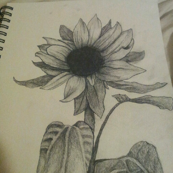 Drawings Of Sunflowers In Pencil Sunflower drawing. | A...