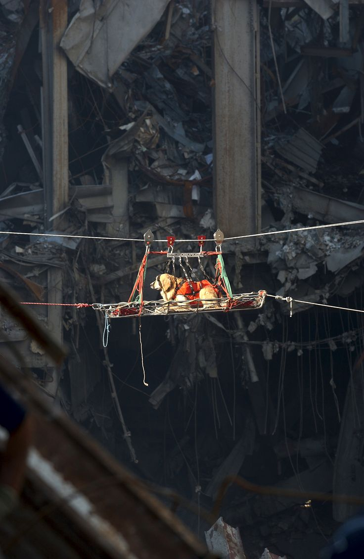 A rescue dog is transported out of the debris of the World Trade Center. The twin towers of the center were destroyed in a Sept. 11 terrorist attack.  Date 15 September 2001