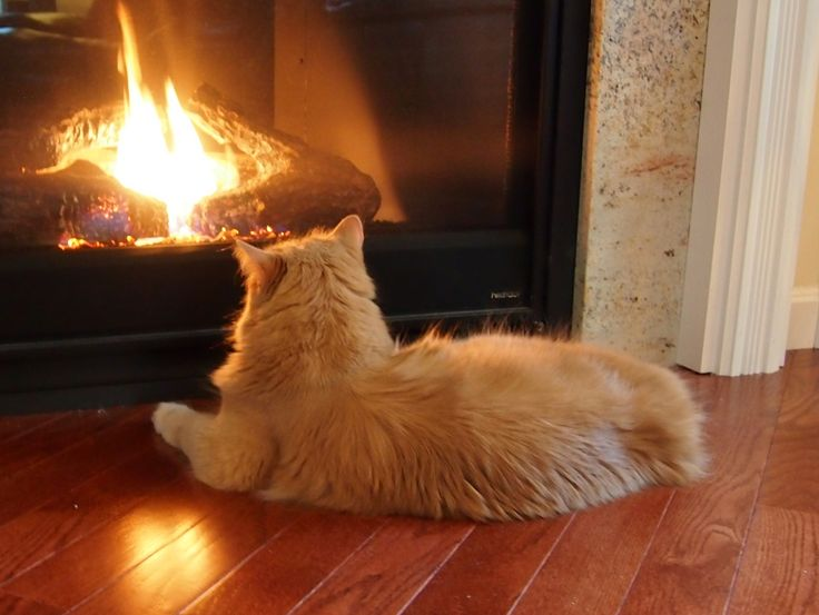 536 Best Warm And Cozy By The Fire Images On