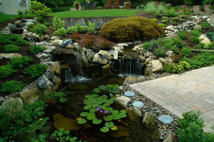 Putting the eco in pond ecosystems for Garden pool ecosystem